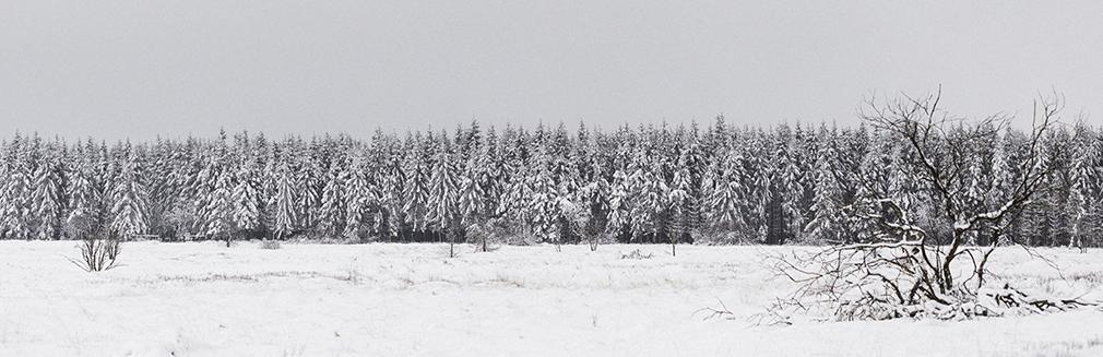 Escape into snow fairy tale
