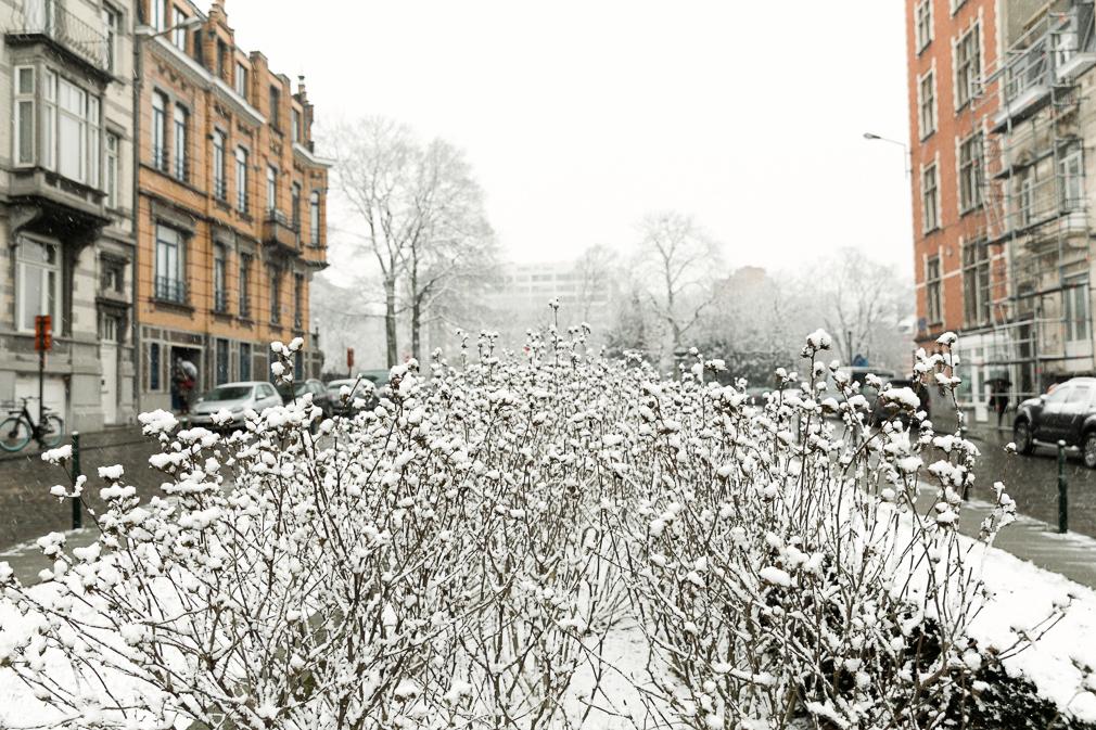 Snowy Brussels